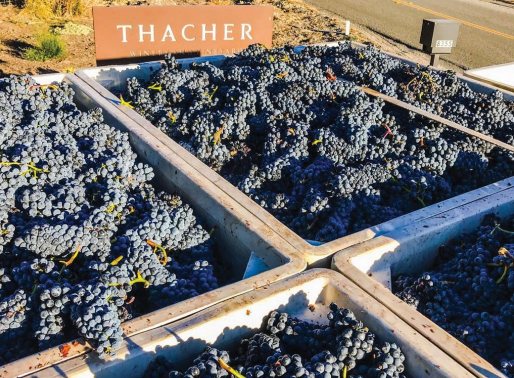 2018 Harvest Comes To A Close In Paso Robles Ava photo