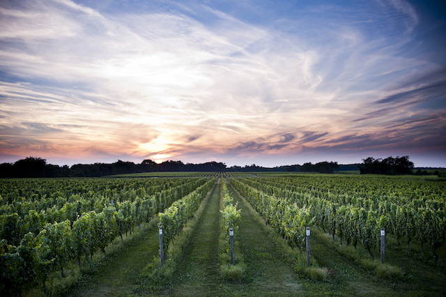 A Guide To Long Island Winery Tasting Rooms photo