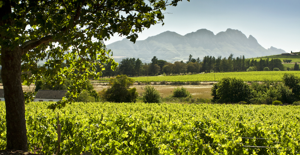 Hartenberg Scenic  10 Reasons to Visit Kunjani Wines in Stellenbosch This Holiday