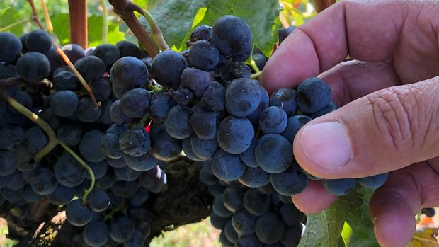 Climate Change Will Affect Your Favourite Italian Wine photo