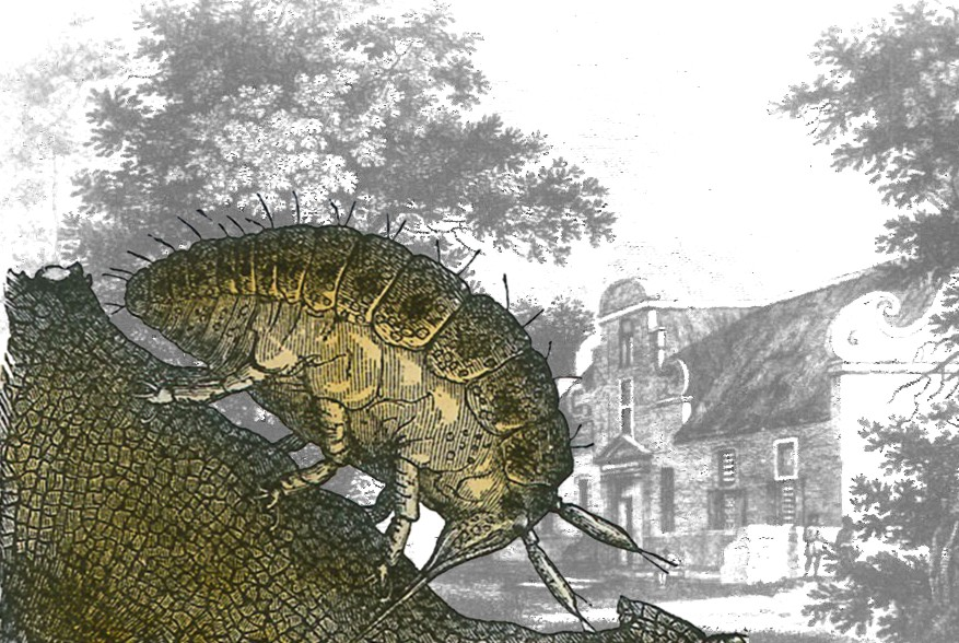 Tim James: 120 Years Since The Pest Phylloxera Came To Constantia photo
