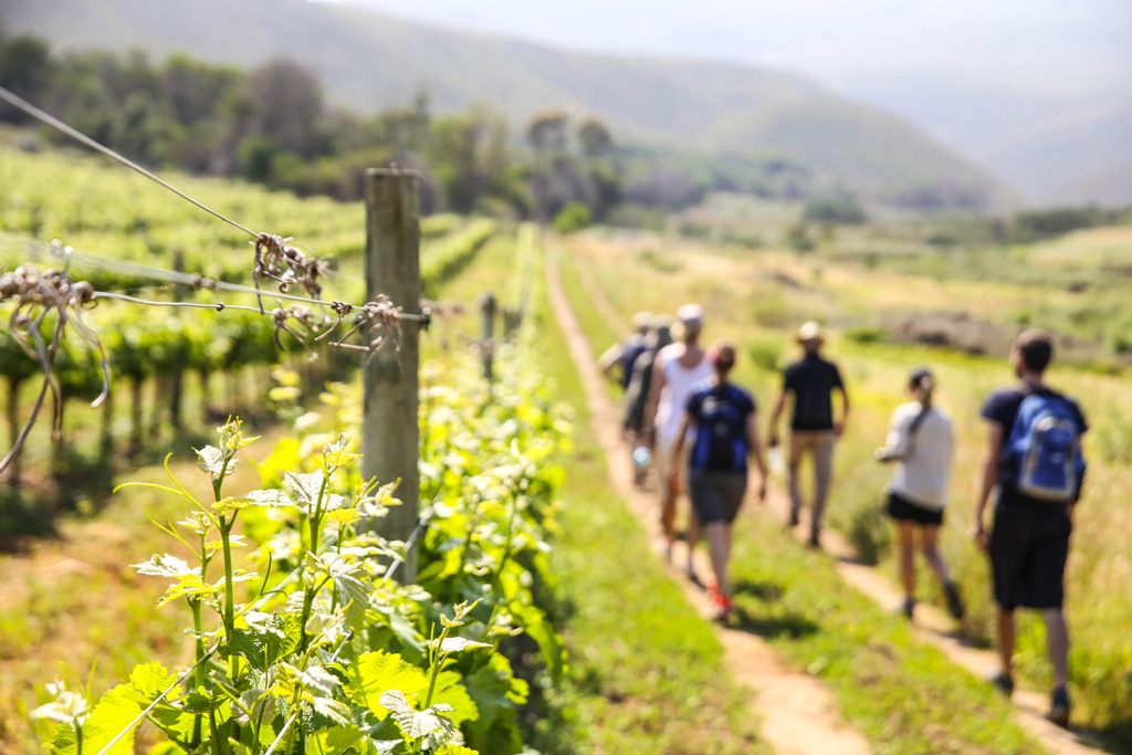 Walking And Wine-tasting Is Heaven On Earth photo