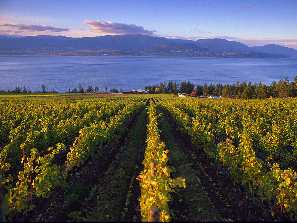 Last: B.c.'s Wine Industry Humming Along Nicely photo