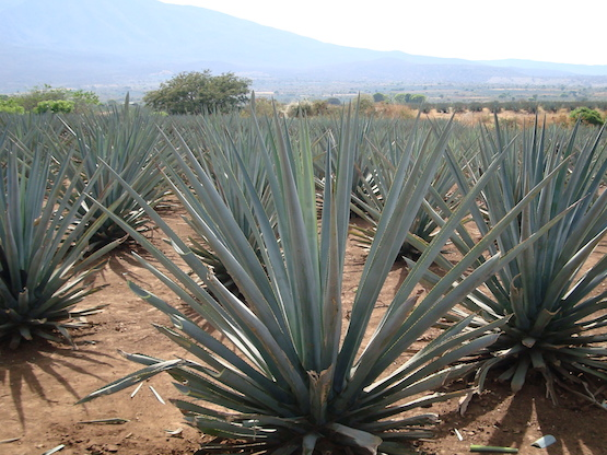 7 Things Candelaria Wants You To Know About Tequila And Mezcal photo