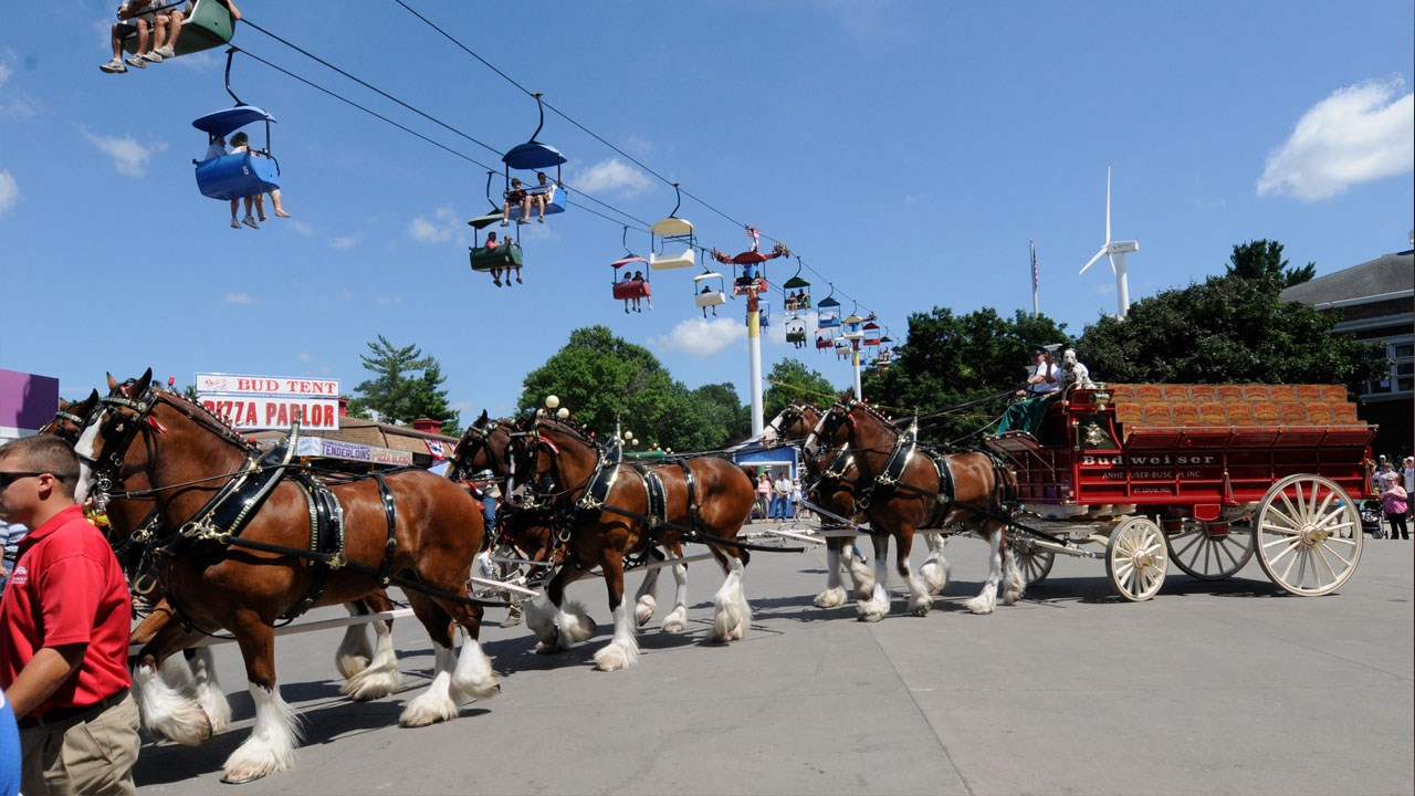 Budweiser Clydesdales To No Longer Train In New Hampshire photo