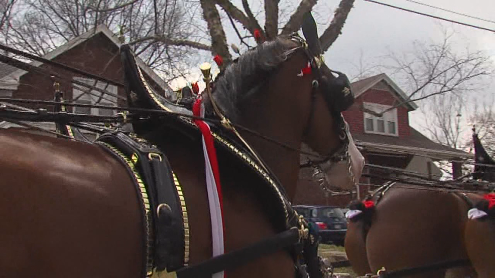 Budweiser Clydedales Celebrate With The Party Source photo