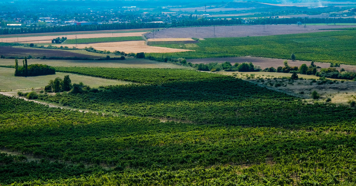 Hungary's Sweet 'wine Of Kings' Is Getting A Crisp, 21st-century Makeover photo