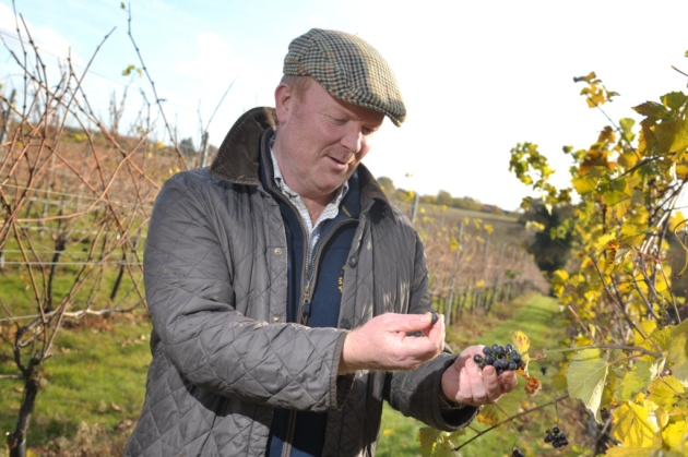 East Anglia Breaks Open The Bubbly As Study Shows Untapped Potential To Be Top Wine-growing Region photo