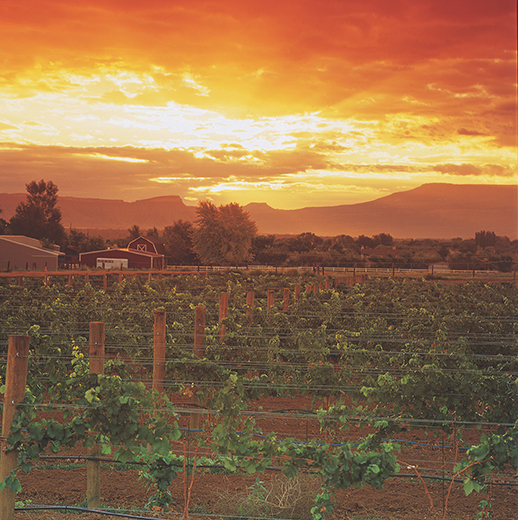 Rich And Pour: Simple Tips For Making Cheap Wines Good, And Good Wines Great photo