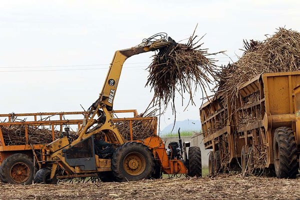 Taskforce To Salvage Kenya's Cane Sector photo