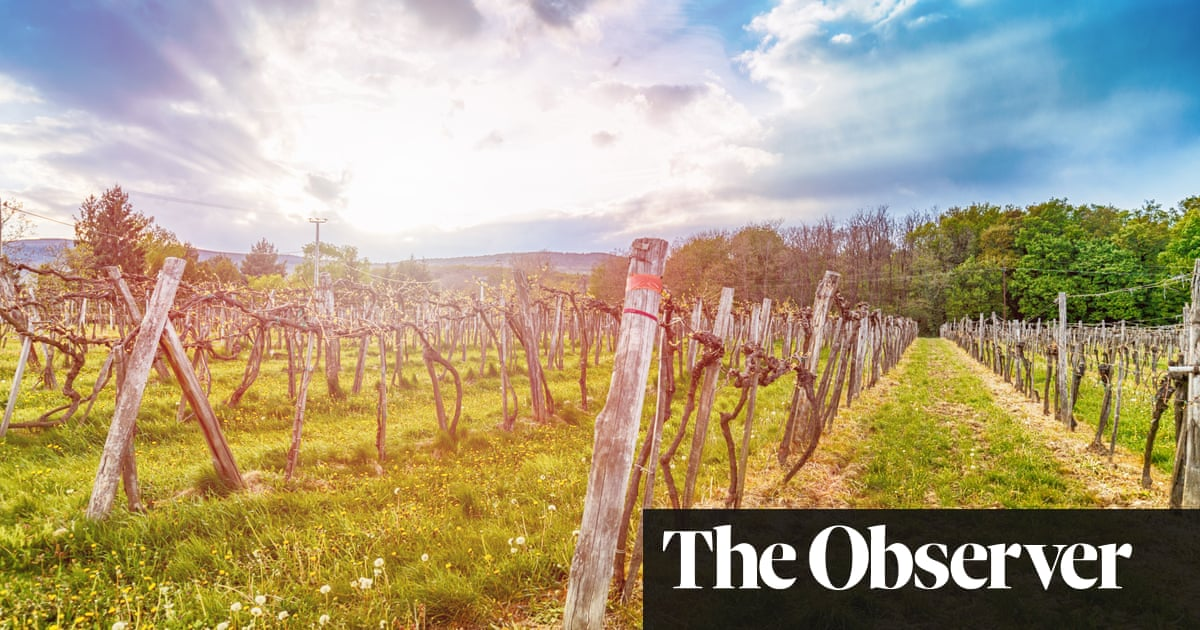 Malbec, Mencia, Chardonnay: The Wine Trends Of 2018 photo