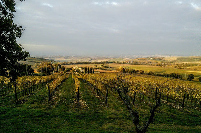 Andrew Jefford: The Brunello Wine Breakthrough photo