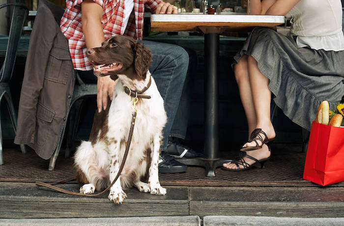 Cape Town Restaurant Launches Menu For Dogs photo