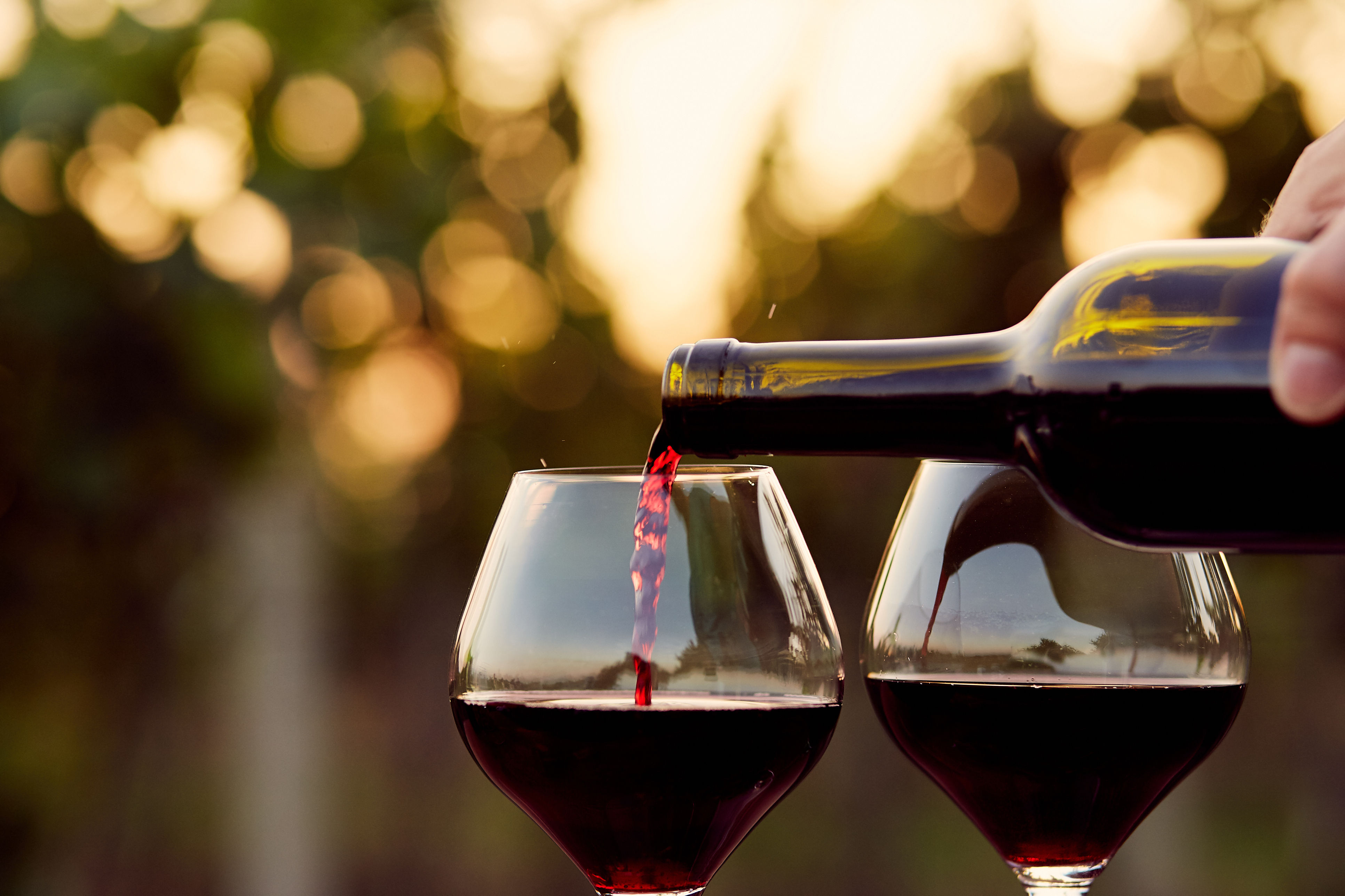 Wine Of The Week: Warm Up With These Wines photo