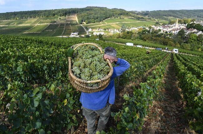 Best Value White Burgundy 2017 En Primeur To Buy photo