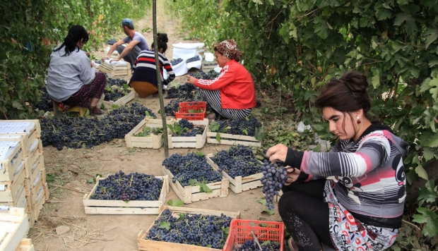 From Nation Of Vodka Drinkers To A Wine Powerhouse? Uzbekistan?s Winemaking Ambitions photo