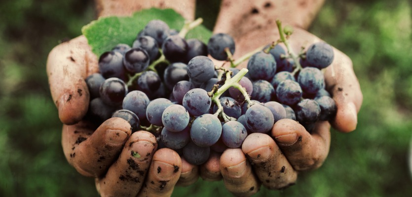 Organic Wine On The Rise And Expected To Keep Growing, Says Study By Iwsr photo