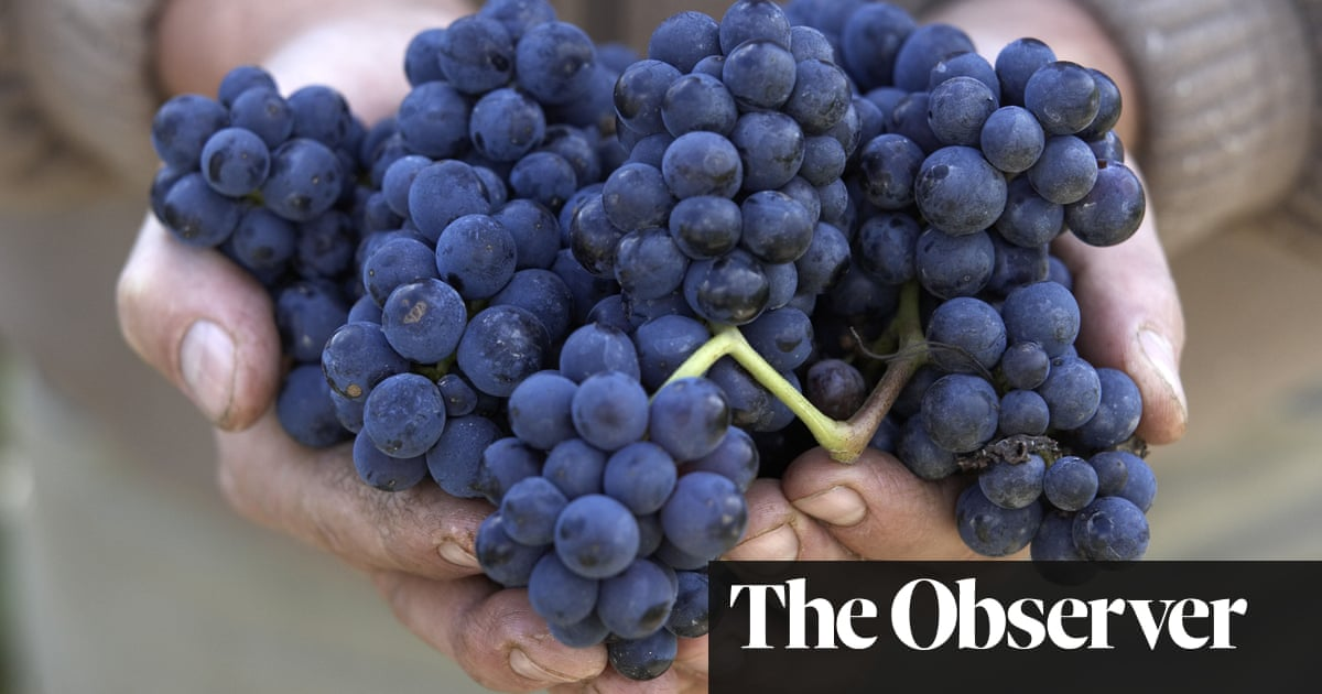 Great Pinot Noirs, But Not From Burgundy photo