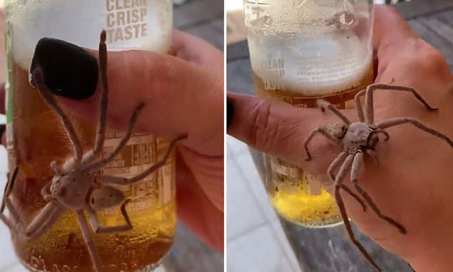 Heartstopping Moment Huge Spider Makes Its Way Across Drinker?s Hand photo