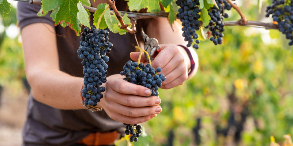 Explore New Australian Wine At Att photo