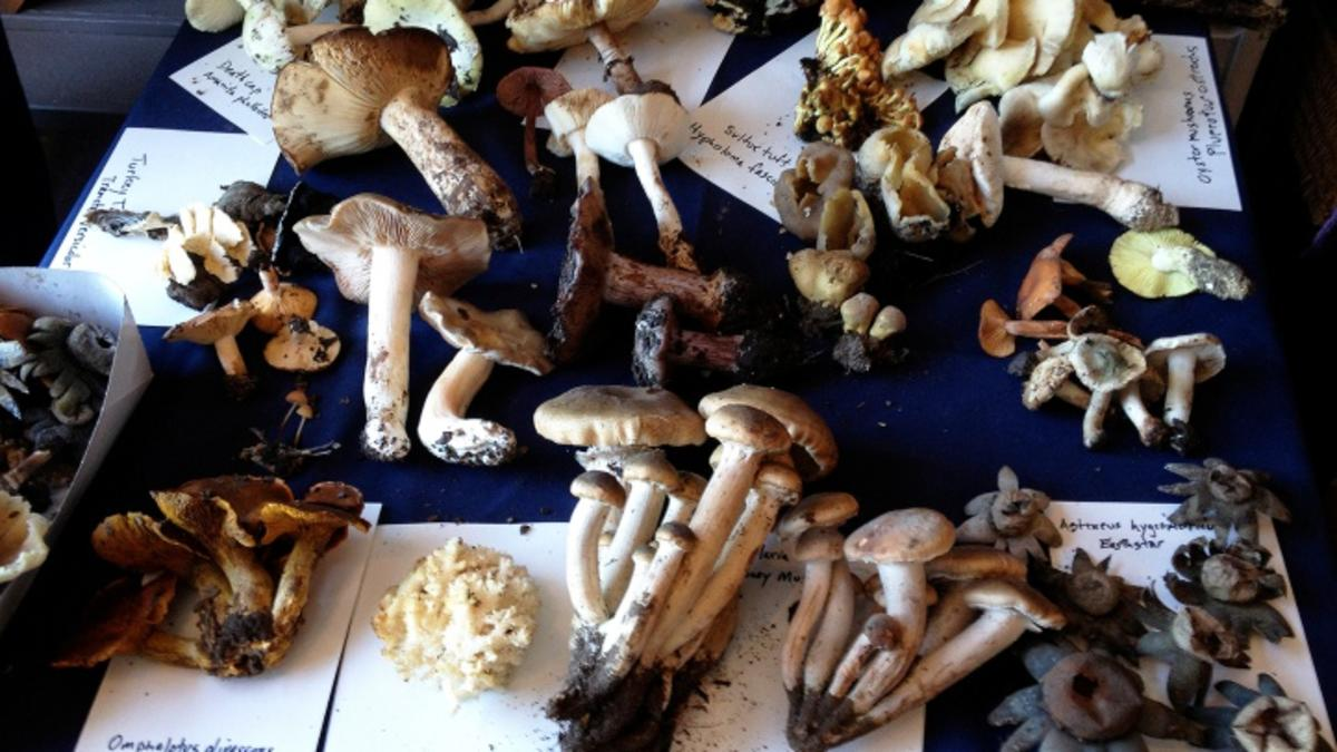Fab Fungi Rule The Los Alamos Mushroom Festival photo