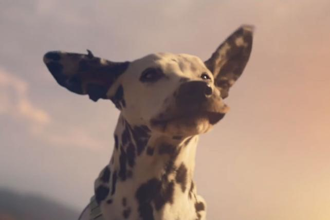 Watch Budweiser's Bob Dylan-backed Super Bowl Ad Touting Wind Power photo