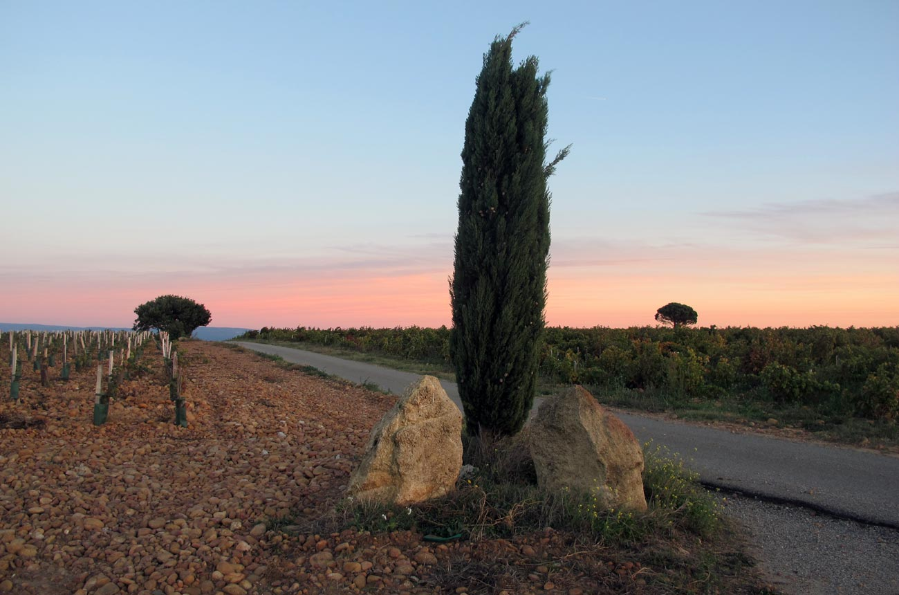Southern Rhône 2017 Report: 'structured And Ageworthy Wines' photo
