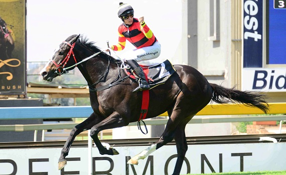 Pe Raider Aims At Sa Triple Crown photo