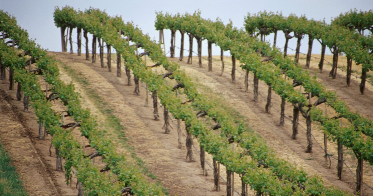 Three Californian Wines That Stand Out, And No, They're Not From Napa photo