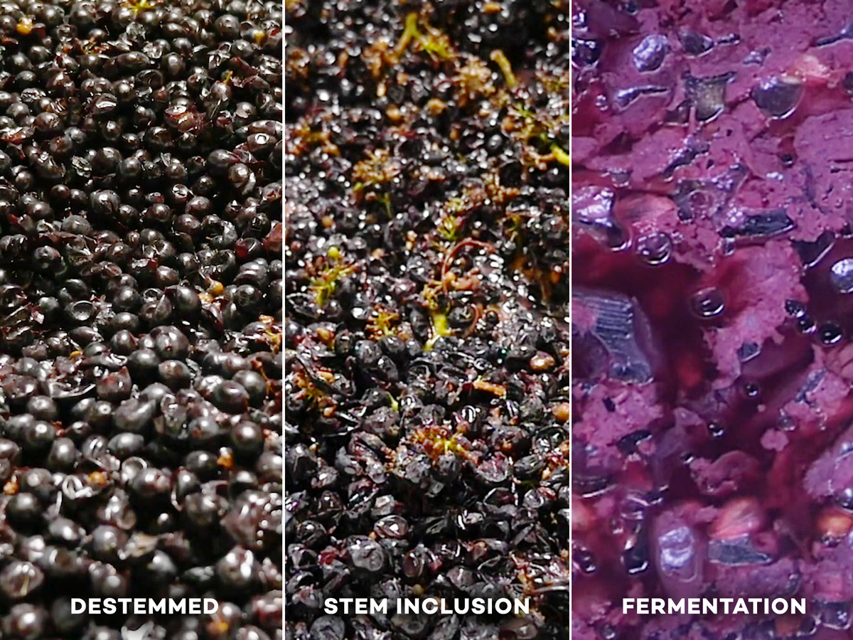 Winemaking From Start To Finish (told In Pictures) photo