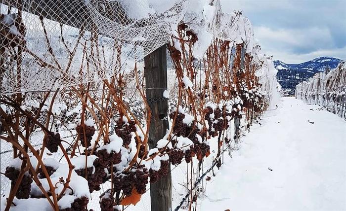 georgias mild winter means - 700×428