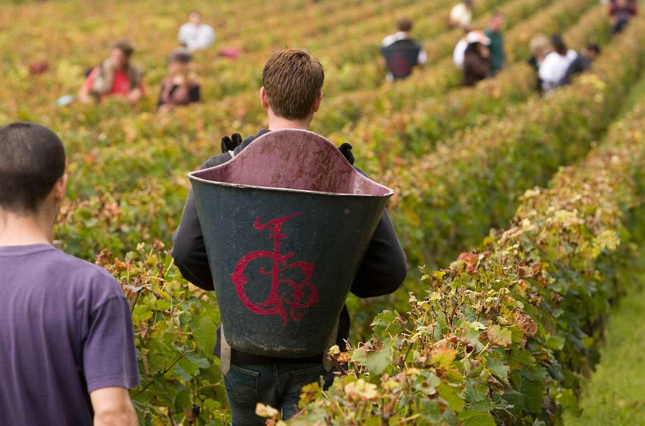 How Pessac-léognan 2016 Wines Taste In The Bottle photo