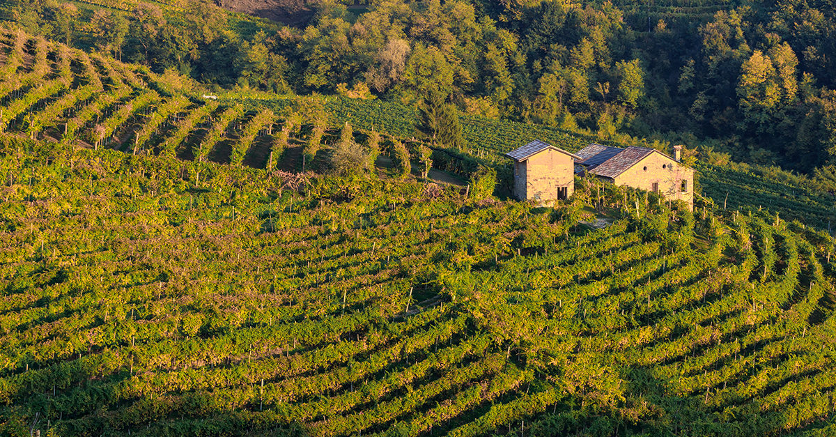 Prosecco Producers ?caught? Manipulating Their Wines photo
