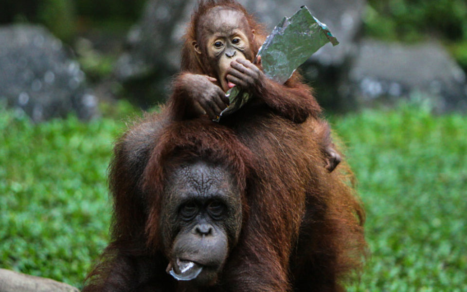 Cadbury, Natural Confectionery Ban For Zoos Across Melbourne, Victoria photo