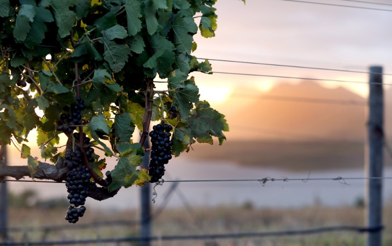 Capture the best picture of the 2019 Benguela Cove harvest and win! photo