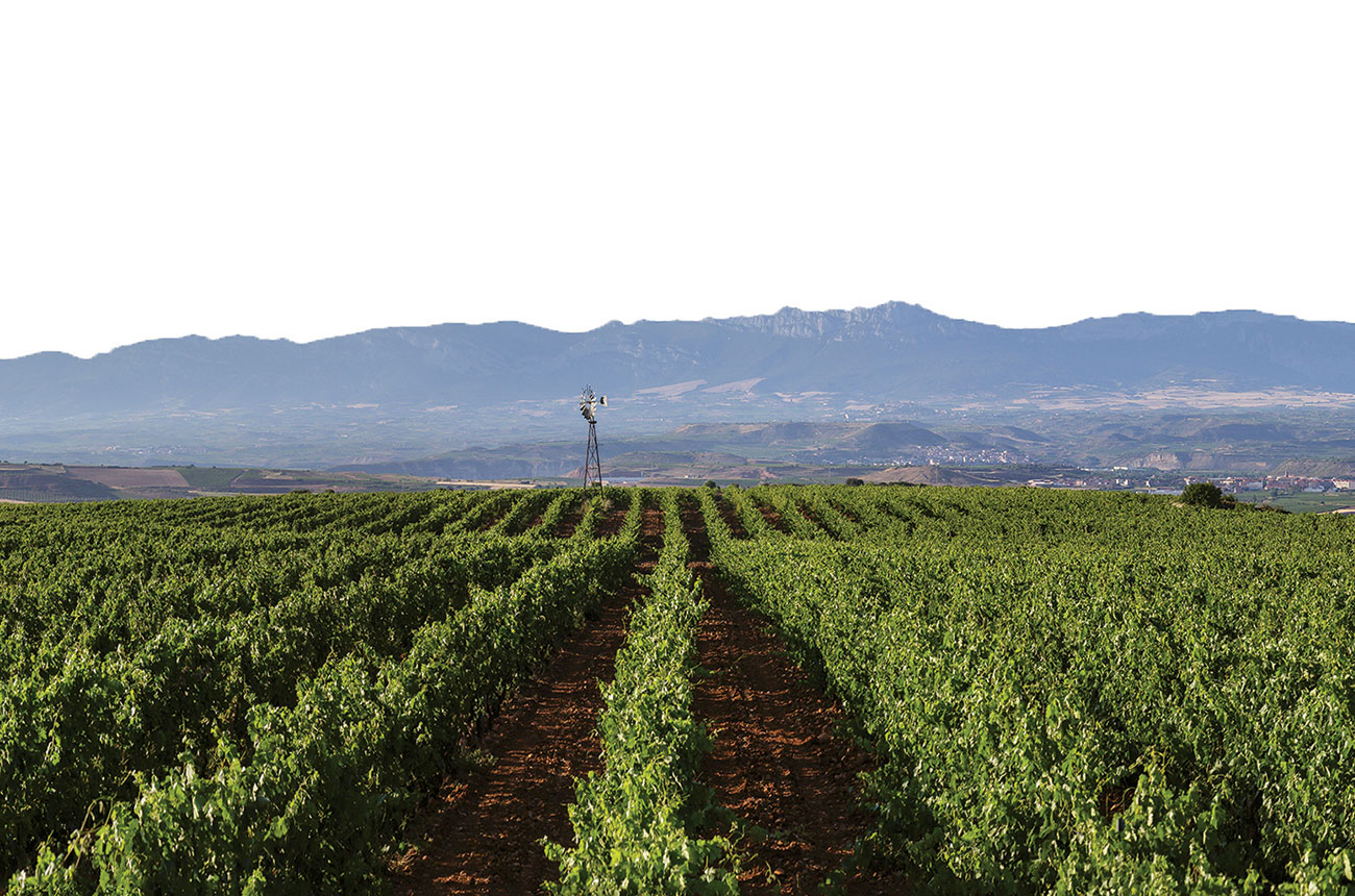 Bodegas Corral: At The Heart Of The Camino De Santiago photo
