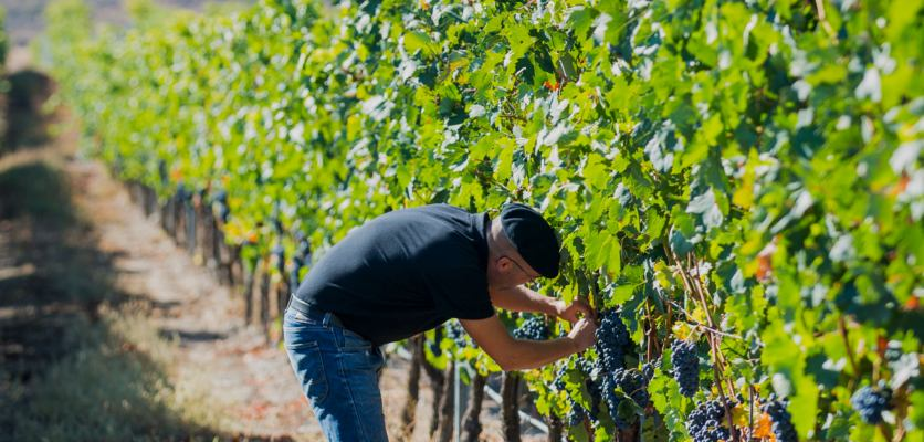 'i Talk To My Plants' – Imbibe Meets The Vine Whisperer photo