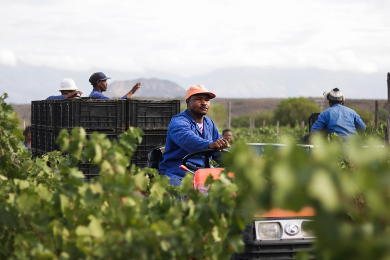 Boplaas hails variety champions in early forecast of Harvest 2019 photo