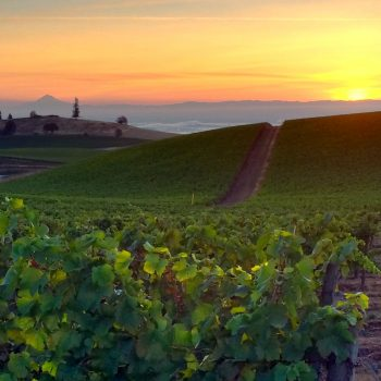Oregon & Washington State Wines Return To London photo