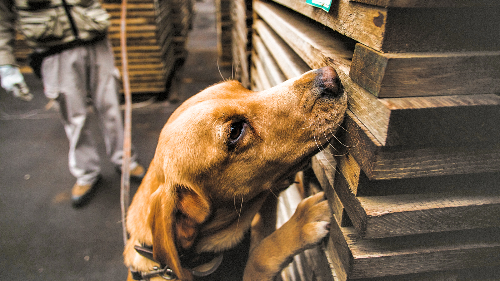 Very Good Dogs Sniff Out Tca Taint, Rescue Wine photo