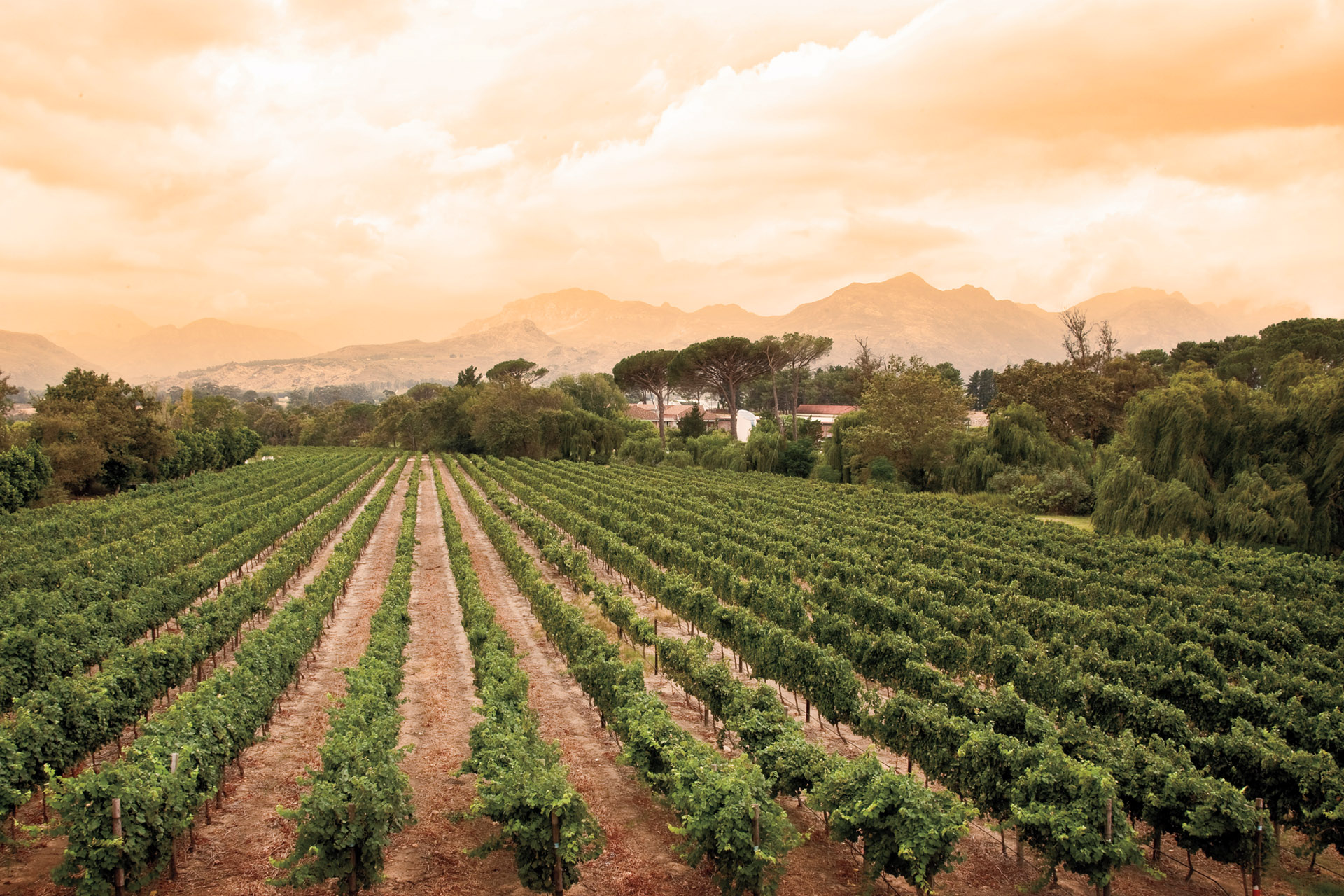 Where to Find the Best South African Wine photo