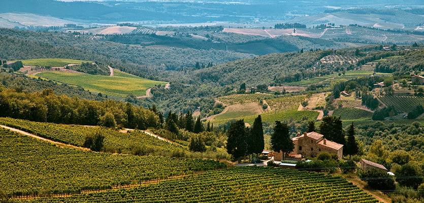 Chianti Winegrowers Call For Experimentation With Disease-resistant Hybrid Grape Varieties photo