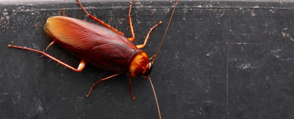 Scientists Think Cockroach Milk Could Be The Next Superfood, And We Wish We Were Kidding photo