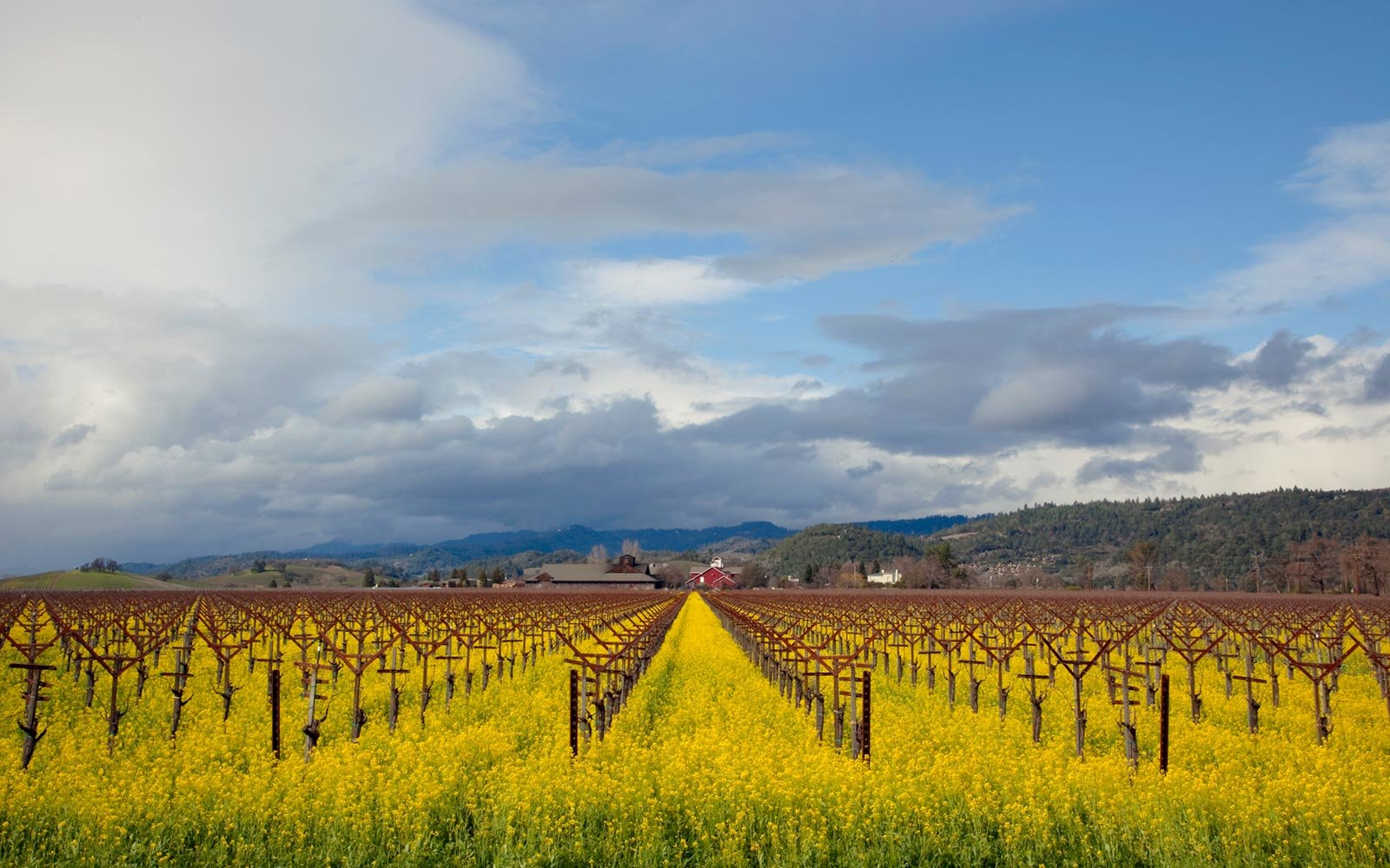 Why Cabernet Season Is The Best Time Of Year To Take A Napa Valley Road Trip photo