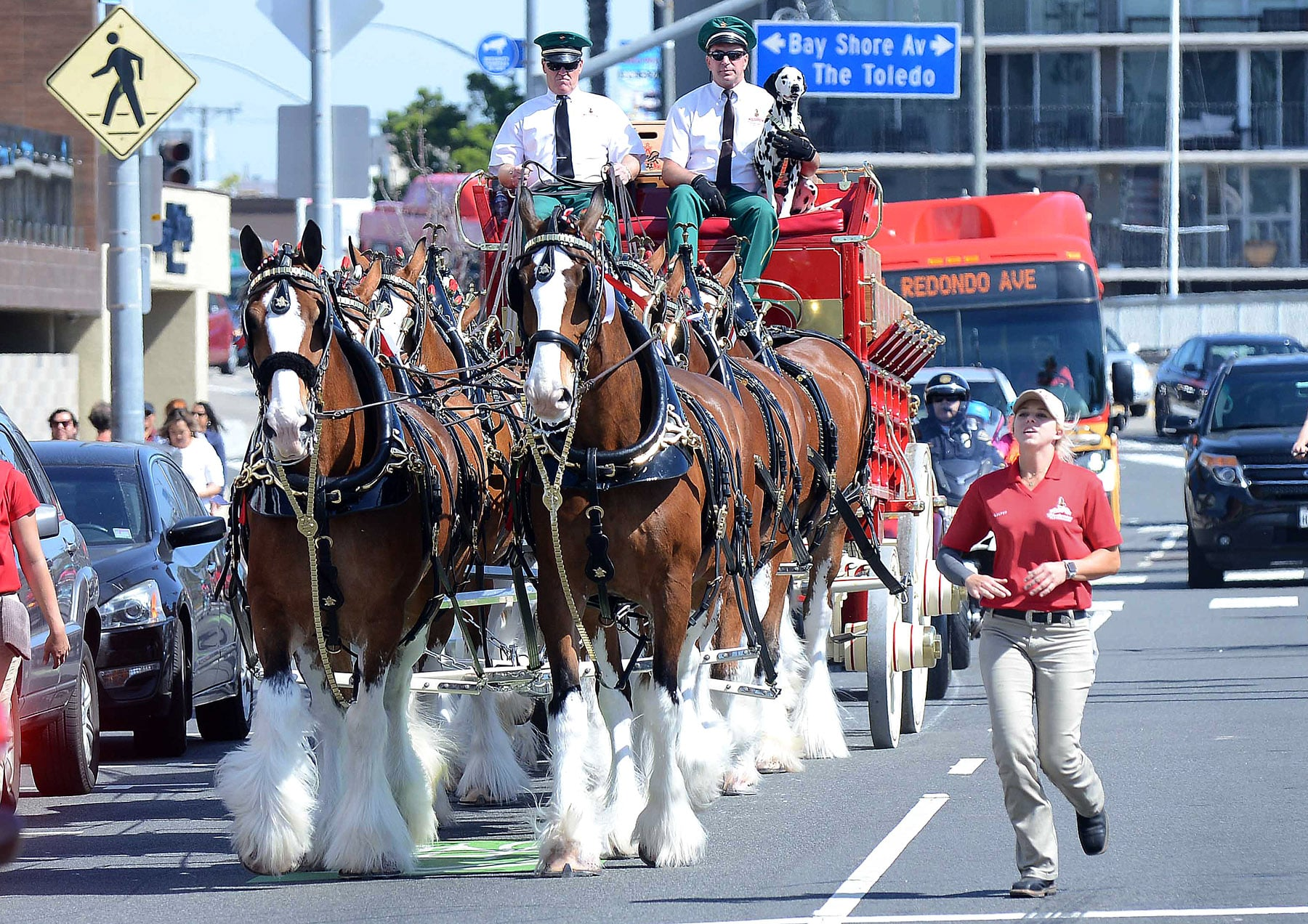 Budweiser Clydesdales Make Their Way Down 2nd Street In Belmont Shore ? Long Beach Post photo