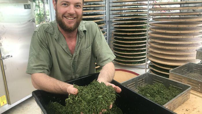 Award-winning Grower Explains How To Avoid Green Tea Being Bitter photo