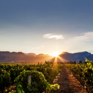 2 South African Wine Producers In Top 50 List Of 'the World's Most Admired Wine Brands' photo