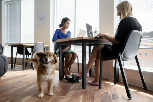 Attractions Of The Shared Workspace photo