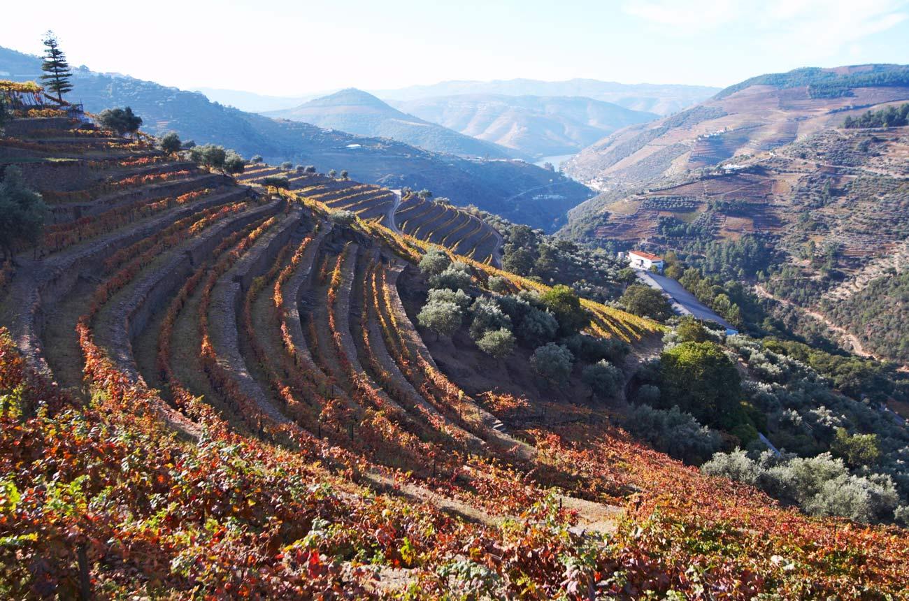 Tasting Quinta Do Noval Single Varietal Wines photo
