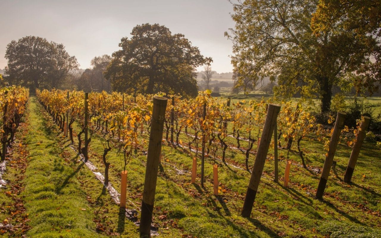 Kent To Become International Wine Tasting Holiday Destination As 2018 Heatwave Produces Vintage Year For English And Welsh Wine photo